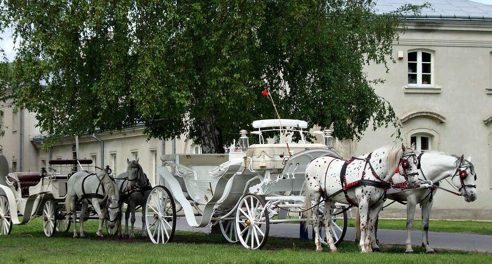 pojazd do ślubu